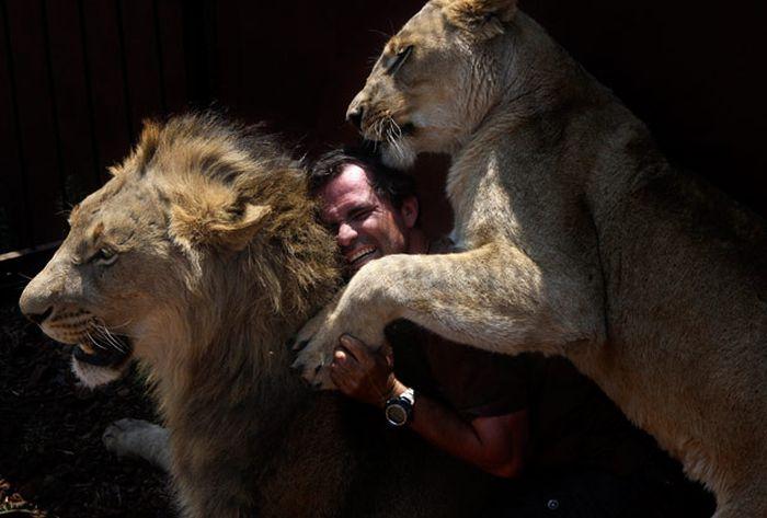 Повелитель львов (13 фото)