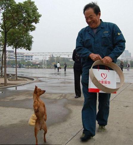 Собака, которая ходит только на двух лапах (4 фото)