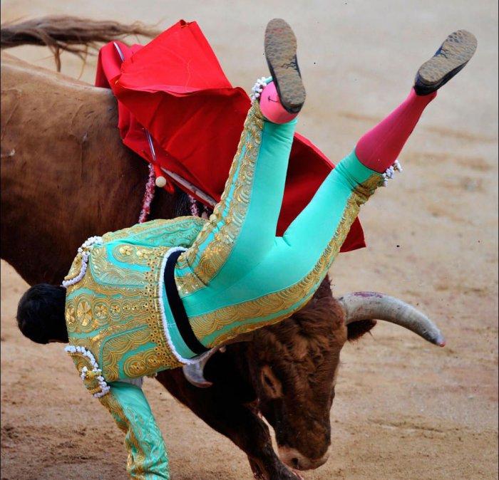 Жестокая месть быков (24 фото)