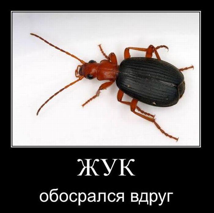 Прикольные картинки про жука, для родных близких