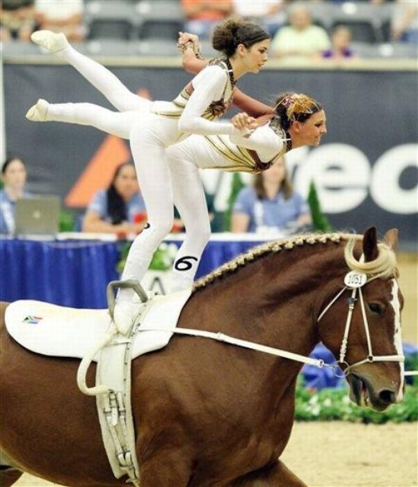 Трюки на лошадях (10 фото)