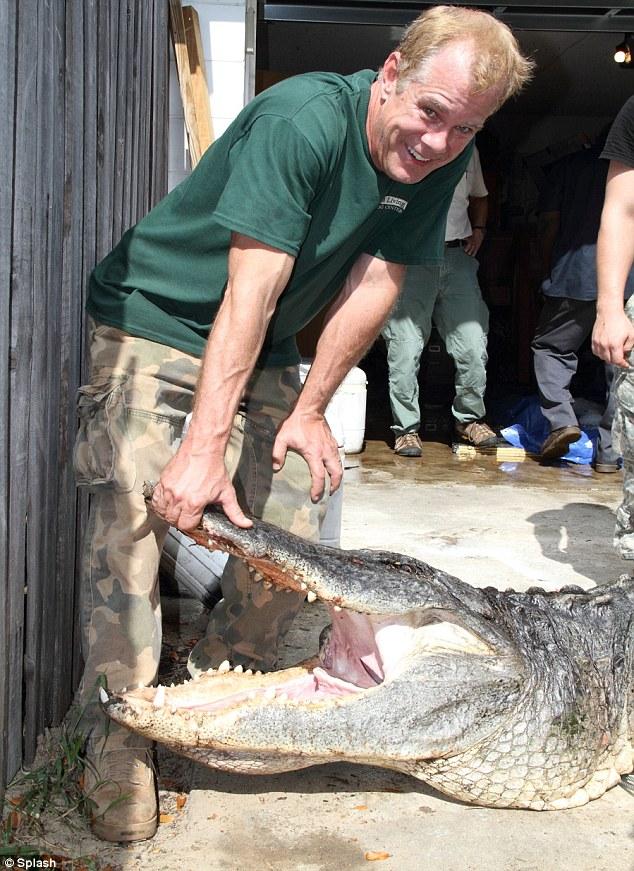 4-метровый аллигатор