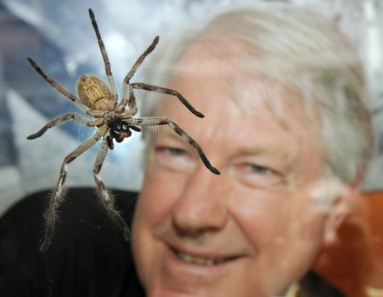 """Австралийский """"Человек-Паук"""" проведет три недели с ядовитыми пауками"""
