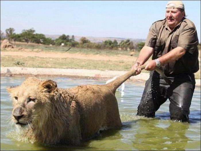 Как купают хищников