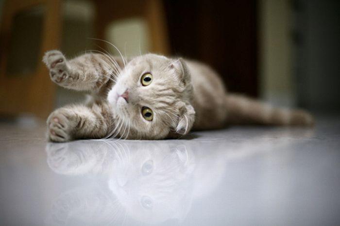 Подборка котов (34 фото)