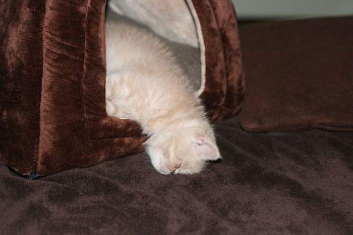 Позитивный котенок (7 фото)