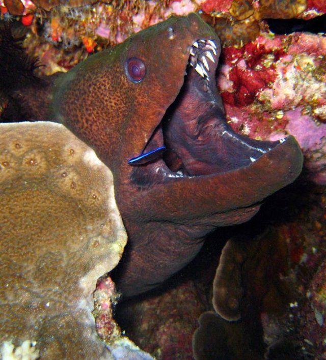 Адские существа из морских глубин