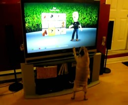 Мопс и компьютерная игра