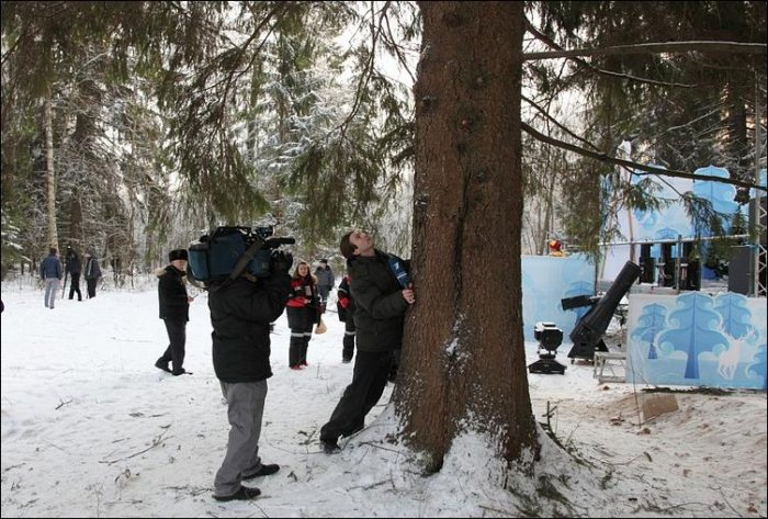 Как спилили кремлевскую елку