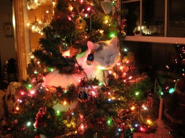 Новогодние елки и котейки