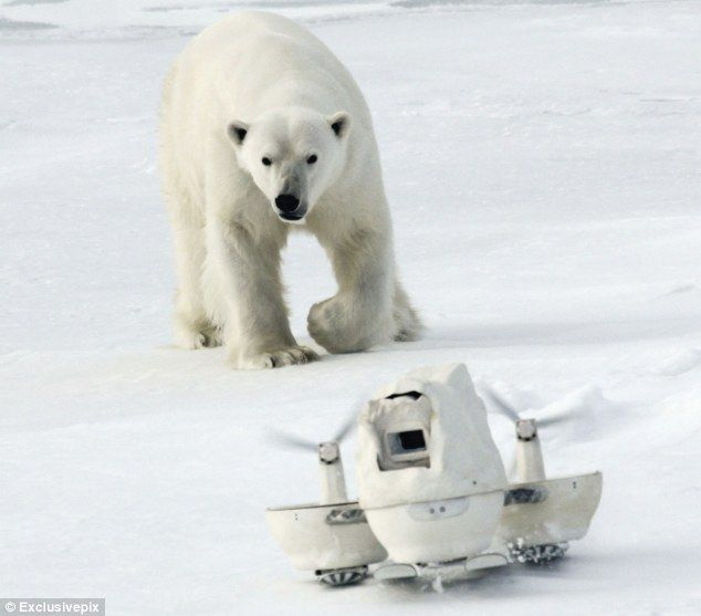 Уникальные кадры полярного мишки