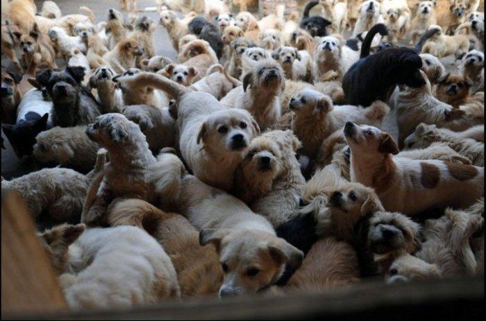 Приютила полторы тысячи собак и 200 кошек