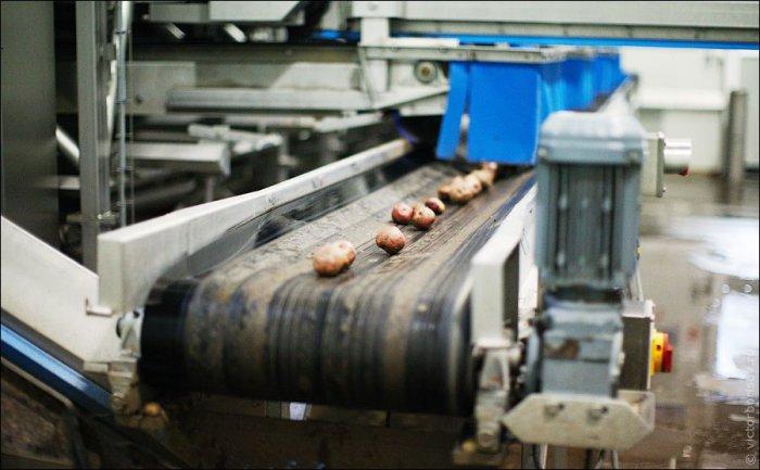 Как делают картофельные чипсы и сухарики. Виртуальная экскурсия
