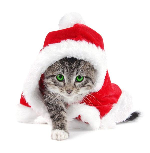 Новогодние коты и котята