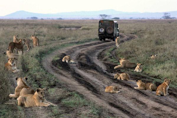 Национальный парк Серенгети (10 фото)