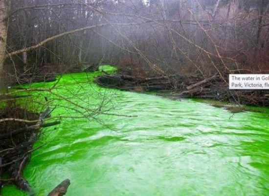 Позеленевшая река в Канаде (6 фото)