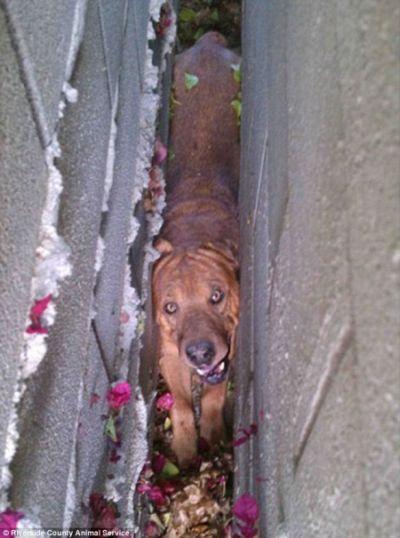Спасение собаки (3 фото)