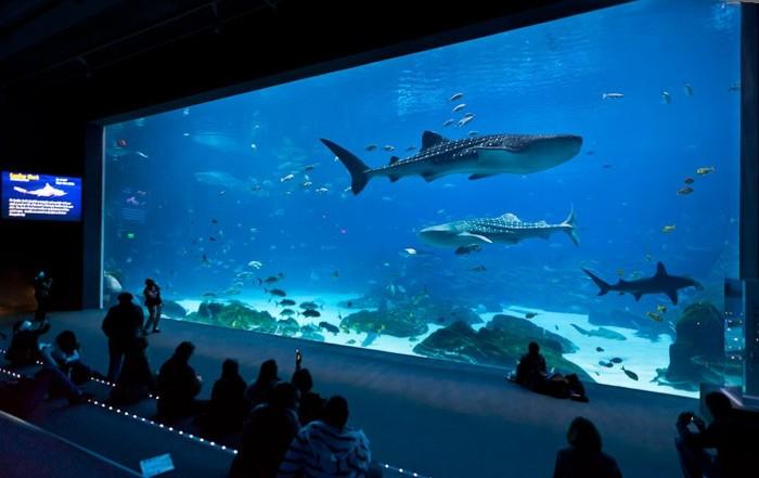 Самый большой аквариум в мире (26 фото)