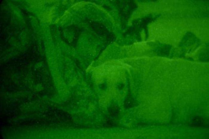 Собаки на службе (28 фото)