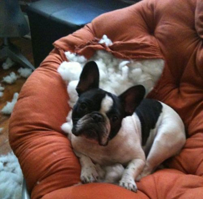 Если диван не понравился псинке