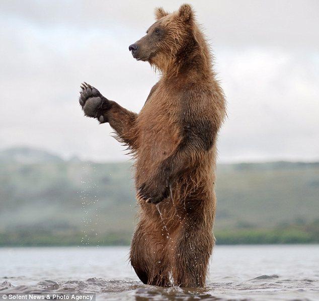 Замечательные фотографии медведей