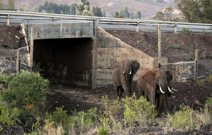 Первый подземный переход для слонов в Кении