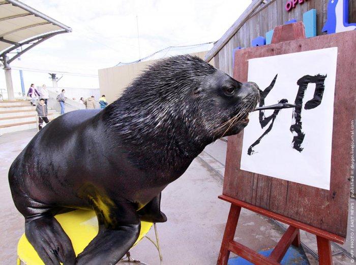 Морской лев поздравил с Новым годом по-китайски