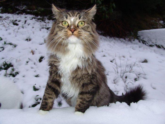 Котейки на снегу