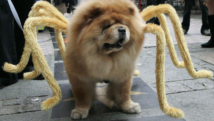 Стильная одежда для собак (38 фото)