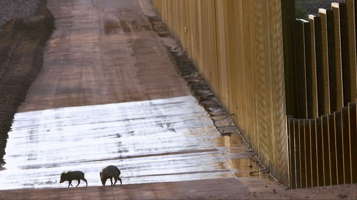 Американо-мексиканская стена (18 фото)