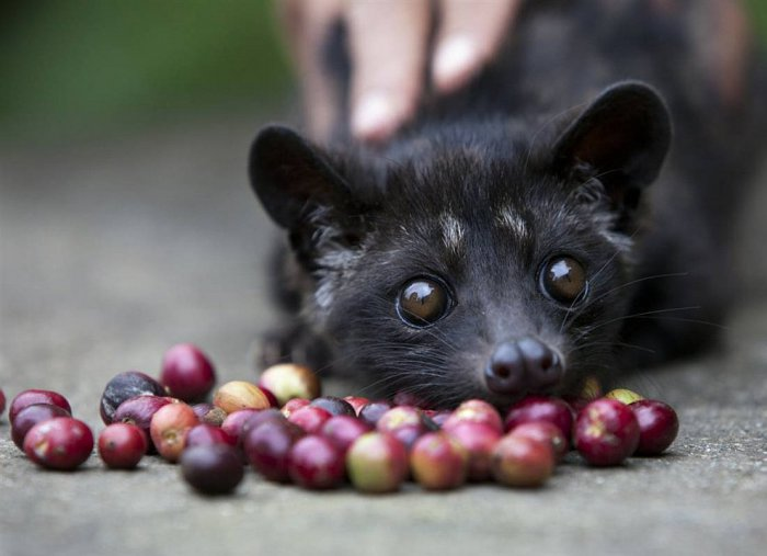 Подборка интересных животных из разных уголков мира