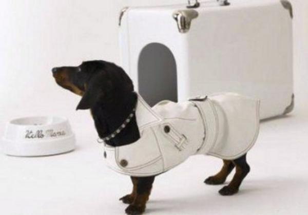 Креативные домики для собак