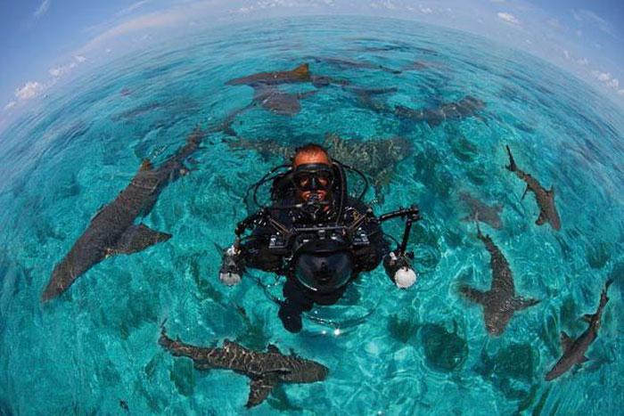 Джим Абернети и его акулы