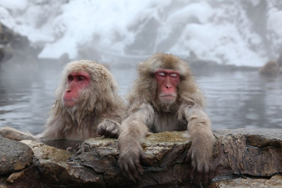 основной обезьяны и вода картинки люди, которые над
