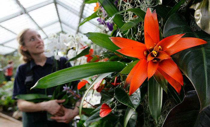 Выставка тропических растений