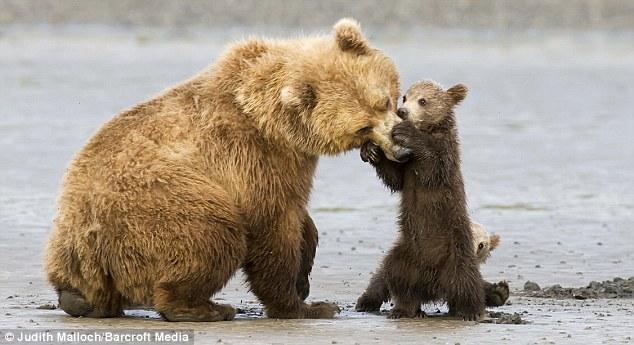 Забавная семейка медведей
