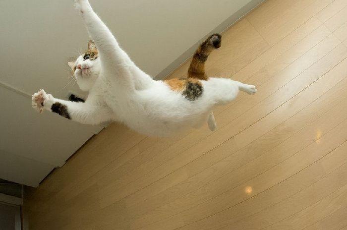 Коты в полёте