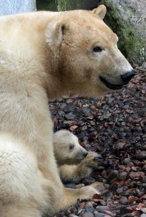 Детеныш с мамой-медведицей