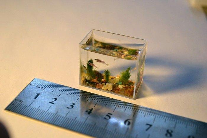 Самый маленький аквариум с рыбками