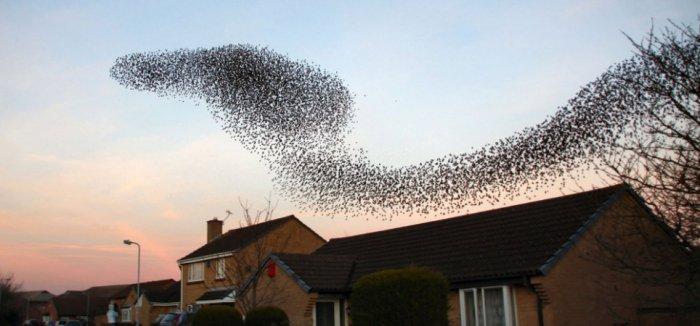 Потрясающая картина летящей кобры