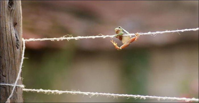Лягушка-гимнастка (5 фото)