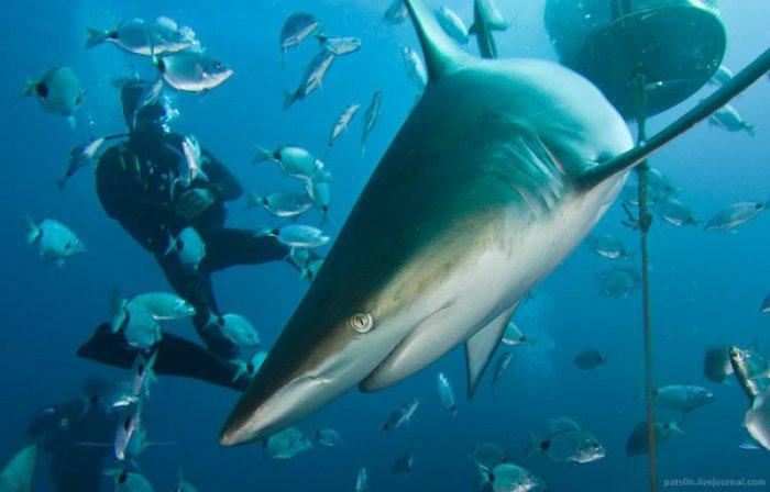 Очаровательный подводный мир