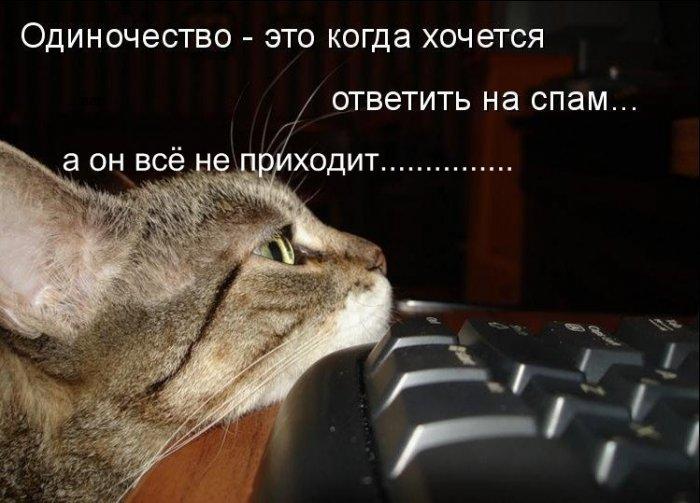 Приколы из жизни кошачьей