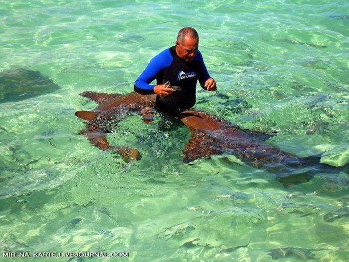 Купание с акулами (45 фото)