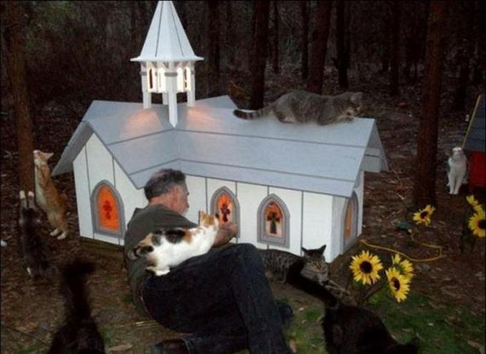 Кошачий приют
