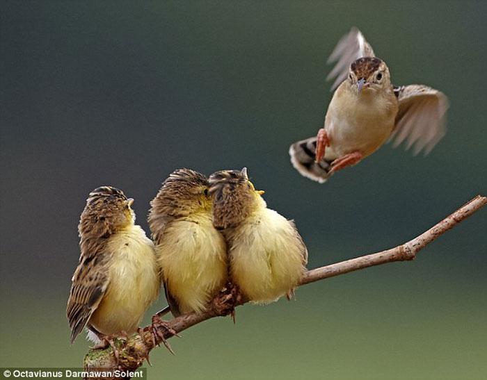 Кормление птенцов (12 фото)
