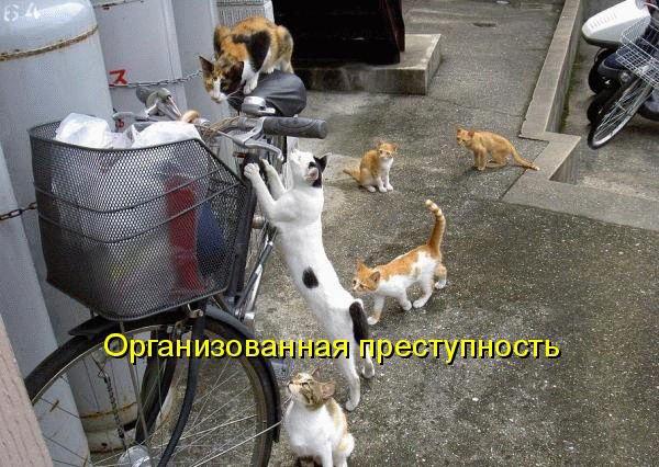 Сегодня у нас в гостях котоматрицы