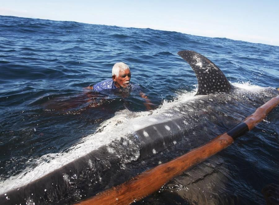 к чему ловить китов