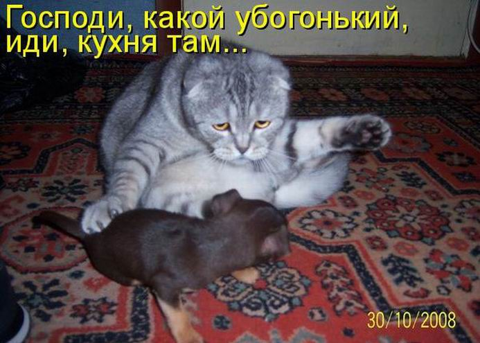 Приколы с котами