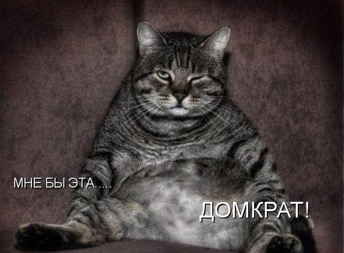 Веселенькие котоматрицы